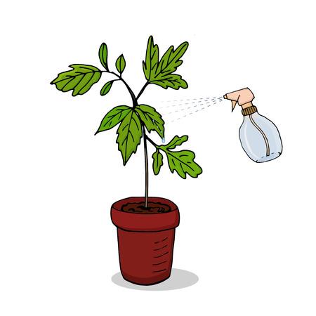 Care for indoor plants. Watering flowers. Vector