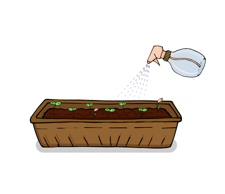 WebIllustration of the care and watering for seedlings in the drawer. Vector Illustration