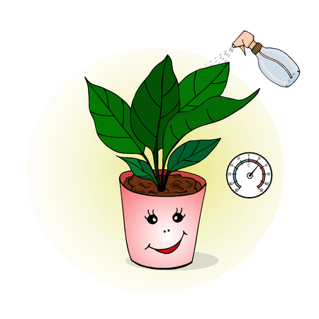 Proper care of home plants. Illustration of houseplant. Vector 向量圖像