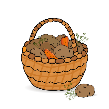 Basket with potato yields isolated on a white background.. Vector illustration