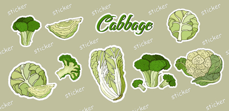 Set of stickers cabbage, white, Peking, broccoli, cauliflower. Vector illustration