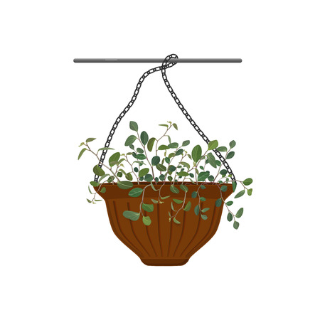 Pot hanging with potted flowers Tradescantia isolated on white background. Vector illustration Иллюстрация