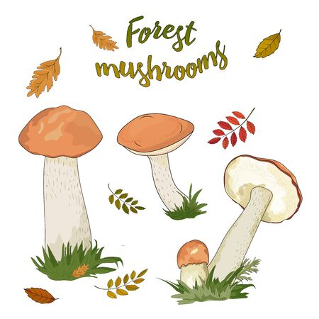 Forest mushrooms with a red cap isolated on white background Ilustração