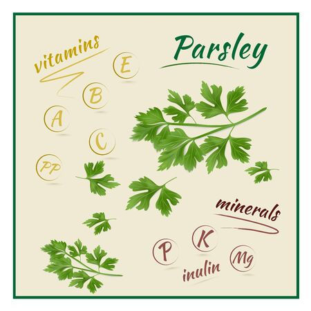 Illustration of the vitamins and minerals in the parsley plant. Vector illustration