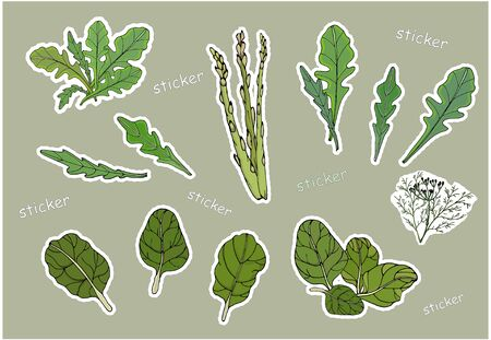 Leaves of green lettuce, spinach and asparagus in the form of insulated stickers. Vector
