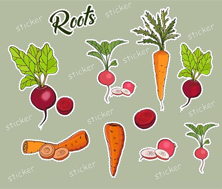 Set of root crops Markov, beets, radishes in the form of insulated stickers. Vector Ilustração