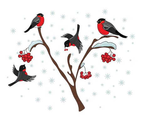 Bullfinches on a tree with mountain ash. Winter, snowfall.