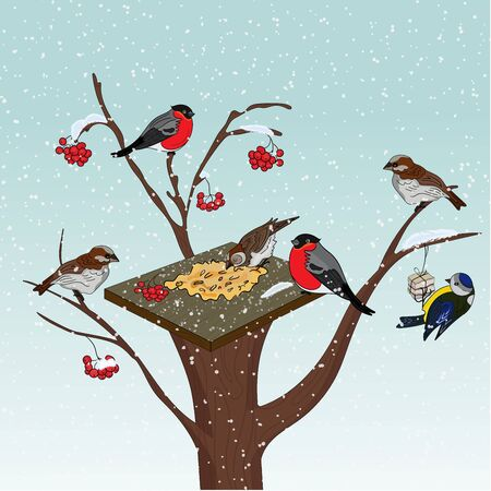 Bird feeder on a tree. Cold winter. Feed the birds in the cold. Bullfinches and tit with a feeder on a tree with rowan berries. Inscription Feed the winter birds. Vector