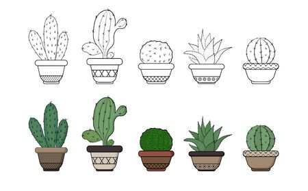 Set of isolated cacti in flower pots. Color and outline. Vector