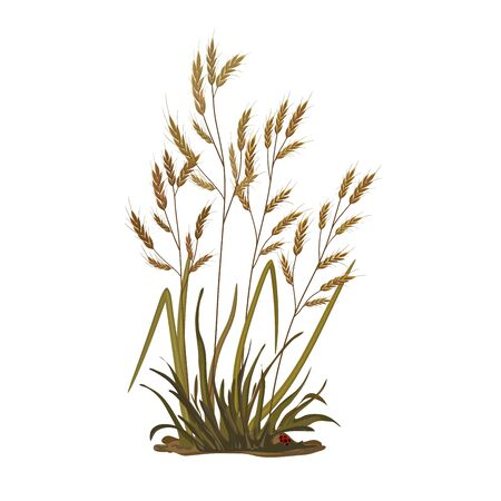 Illustration of a bunch of grass, ears, cereal grass on a white background. Vector