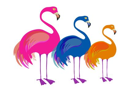 Colorful flamingos trio with birds of pink, blue and orange colors Illustration