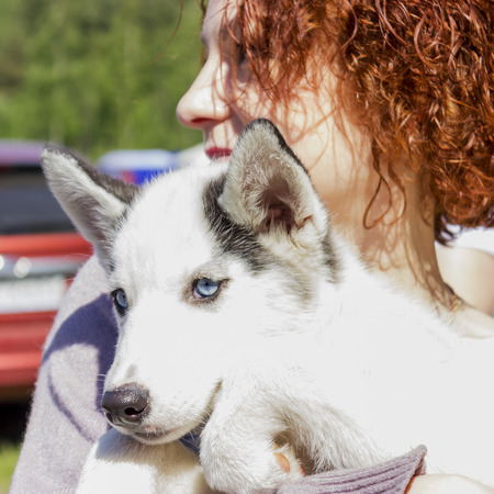 huskys: Handsome girl posing with huskys puppy