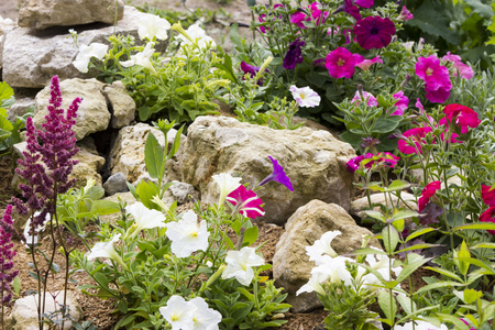 flower: Beautiful rock garden with many different plants Stock Photo