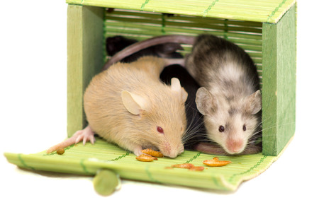musculus: Little mice sitting in green casket and looking around