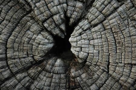 sawn: Sawn end of timber log.