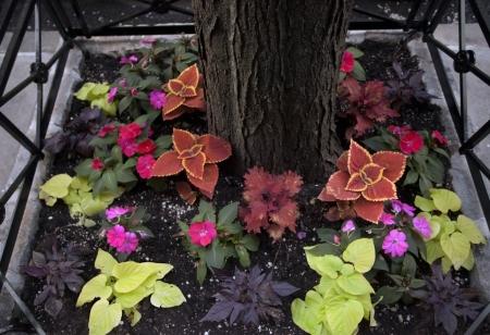massif de fleurs: Parterre autour de l'arbre dans la rue de la ville de New-York