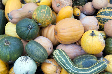 Pile of different pumpkins  photo