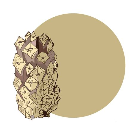 pine cone and beige circle with place for your text Ilustração