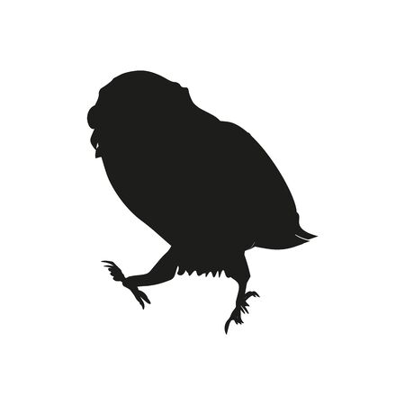 Shadow of a walking owl on a white background