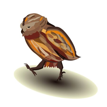 Offended, angry walking owl on a white background
