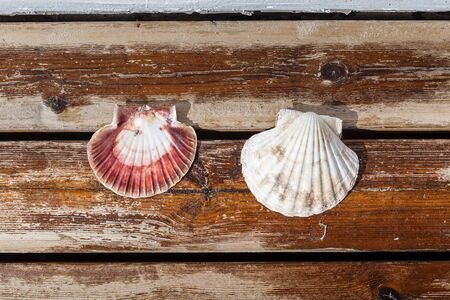 scallop shell: Scallop shell lying on terrace board.