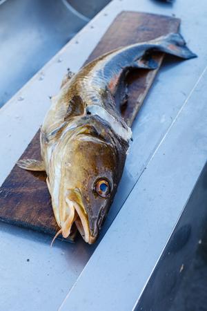 Big fresh trout fish lying on cutting board. Stock Photo - 60245516
