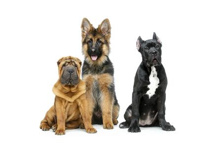 prachtige drie puppyhonden Stockfoto
