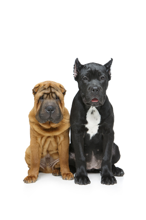 beautiful two puppy dogs Stock Photo