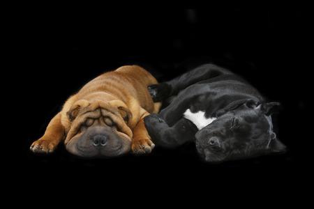 prachtige twee puppy honden slapen