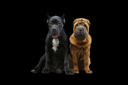 mooie twee puppyhonden