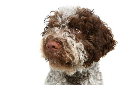 beautiful brown fluffy puppy Stock Photo