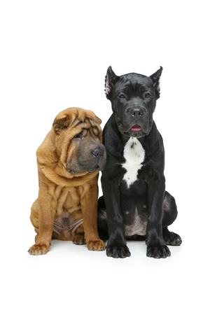 beautiful two puppy dogs Stockfoto
