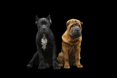 beautiful two puppy dogs Stockfoto - 96400896