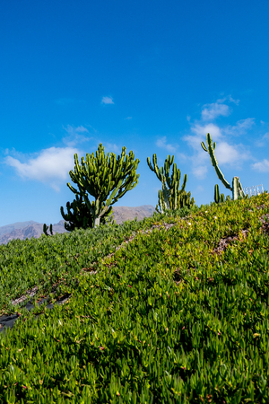 beautiful cactus plants over blue sky background