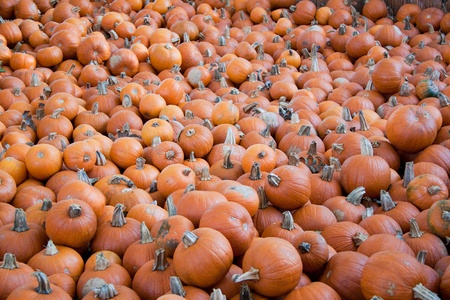 Lots of small orange pumpkins on open air market photo