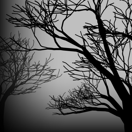 black and white forest: Vector silhouette of trees at dark backdrop