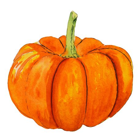 Handdrawn watercolor orange pumpkin. Autumn illustration on white background