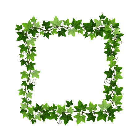 Green ivy creeper plant square wreath isolated on white background. Hedera vine botanical frame design element. Vector illustration of natural decorative ivy foliage border