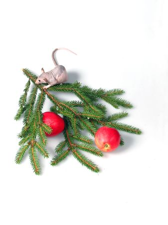 ratty: Rat seduto su un ramo di pelliccia e gli alberi vicino alle mele rosse