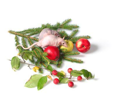 ratty: Coppia di ratti sedersi accanto una mela su un ramo di pellicce di cane-alberi. Ratti