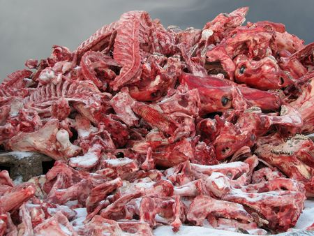 carcass meat: Argument of the vegetarian