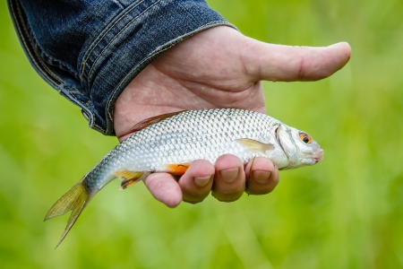 Fish lies in the hand of the fisherman photo
