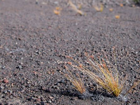 Small Plants Growing out of Barren Land