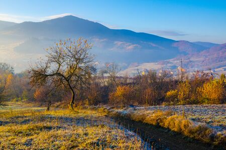 autumn landscape, a tree without leaves, iny on the green grass, the blue mountains in the fog in the background.