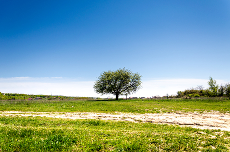 vacant land: Tree in the field. Pictures of the summer landscape. Tree in a green field. Stock Photo