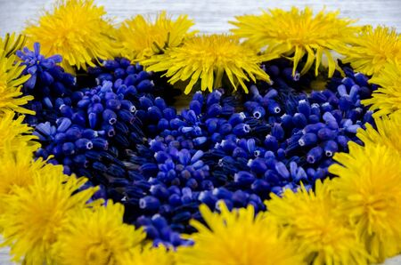 heart shaped: Heart of flowers. Blue and yellow flowers on a table in the shape of a heart