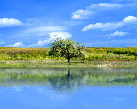 The tree in the field is reflected in the summer lake. Summer landscape.