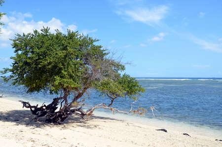 Tree on the beach photo