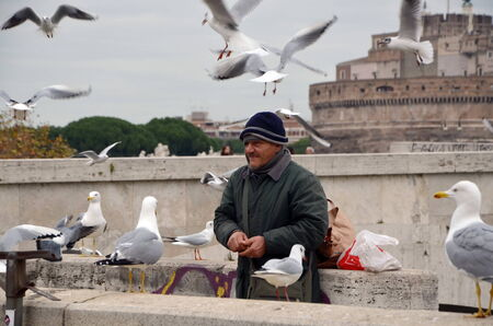 feeds: Man feeds seagulls on the Tiber in Rome, Italy