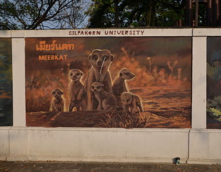 suricatta: Meerkat Suricata suricatta. Graffiti on the wall of the zoo in Bangkok, Thailand